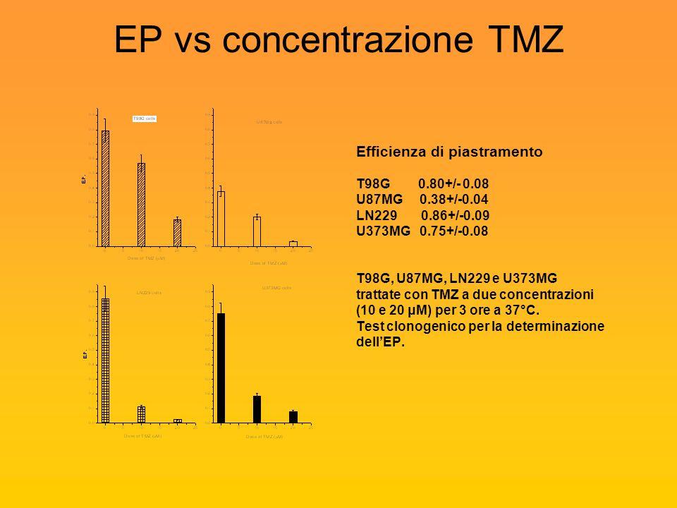 EP vs concentrazione TMZ