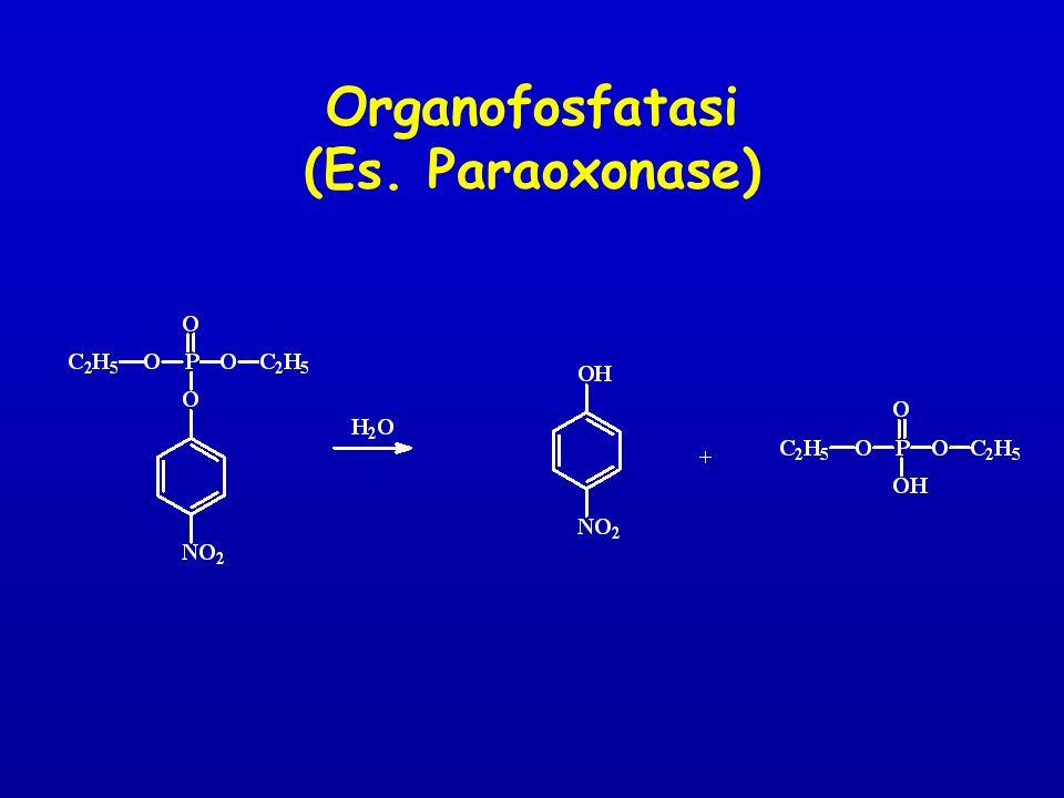 Organofosfatasi (Es. Paraoxonase)
