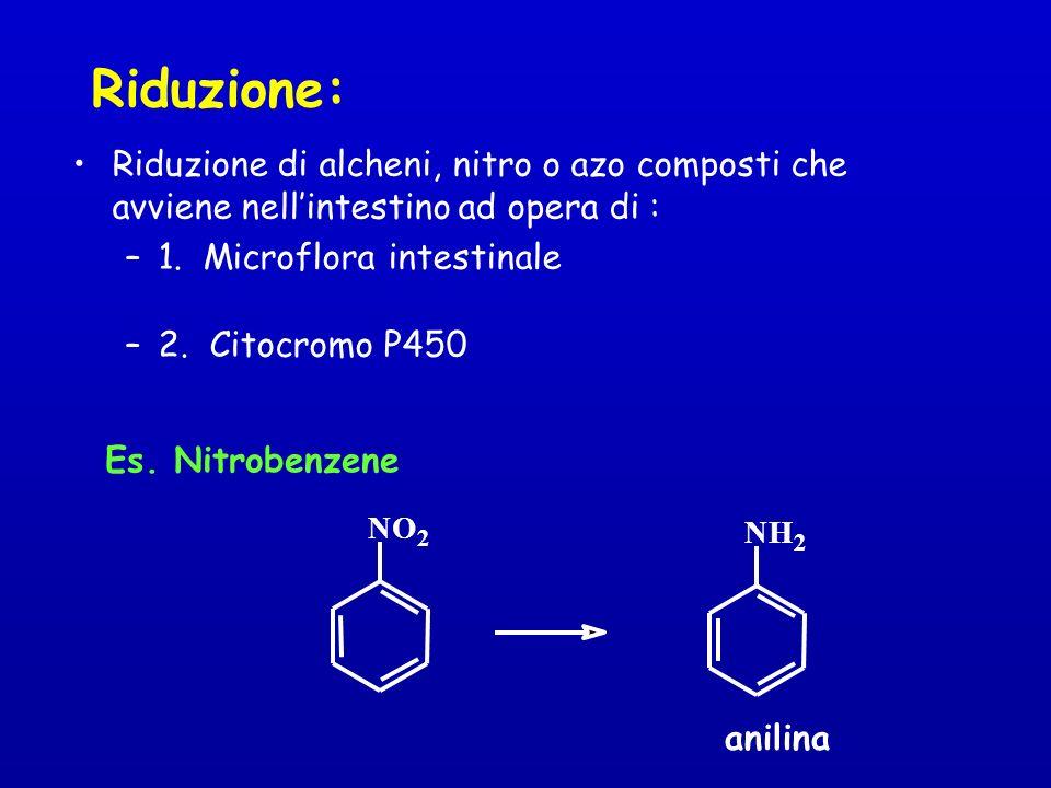 Riduzione: Riduzione di alcheni, nitro o azo composti che avviene nell'intestino ad opera di : 1. Microflora intestinale.