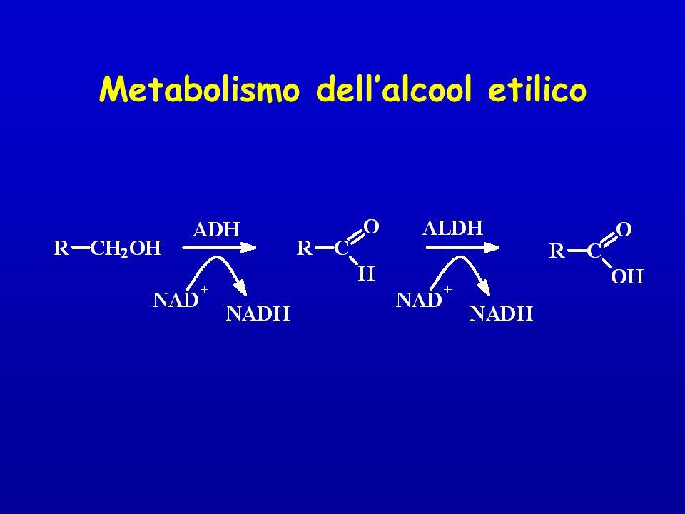 Metabolismo dell'alcool etilico