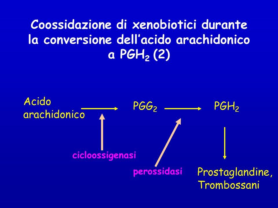 Coossidazione di xenobiotici durante la conversione dell'acido arachidonico a PGH2 (2)
