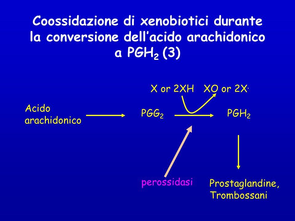 Coossidazione di xenobiotici durante la conversione dell'acido arachidonico a PGH2 (3)