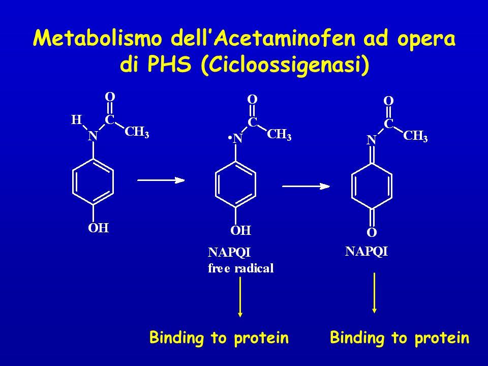 Metabolismo dell'Acetaminofen ad opera di PHS (Cicloossigenasi)