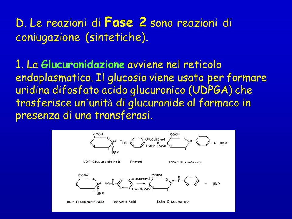 D. Le reazioni di Fase 2 sono reazioni di coniugazione (sintetiche).
