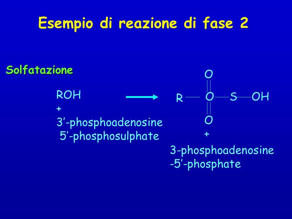 Esempio di reazione di fase 2
