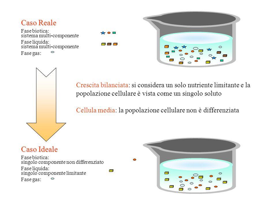 Fase biotica: sistema multi-componente. Fase liquida: Fase gas: Caso Reale.