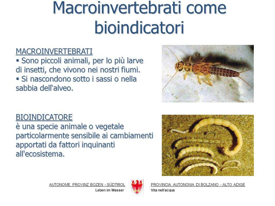 Macroinvertebrati come bioindicatori