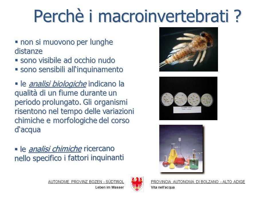Perchè i macroinvertebrati
