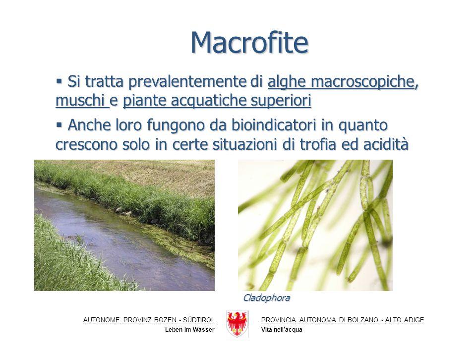 Macrofite Si tratta prevalentemente di alghe macroscopiche, muschi e piante acquatiche superiori.