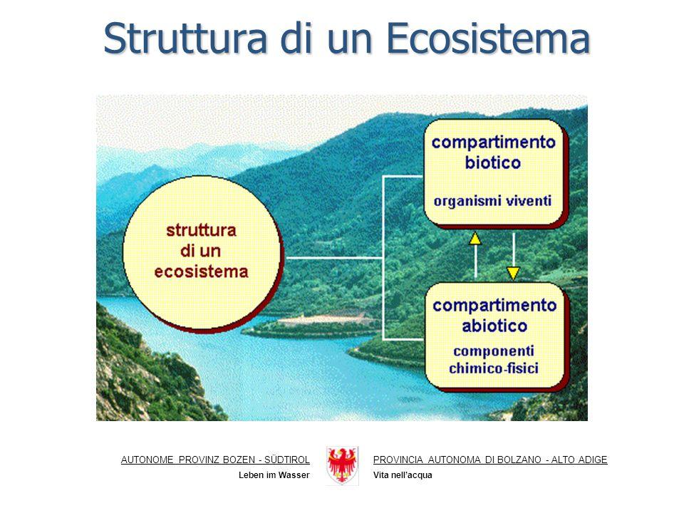 Struttura di un Ecosistema