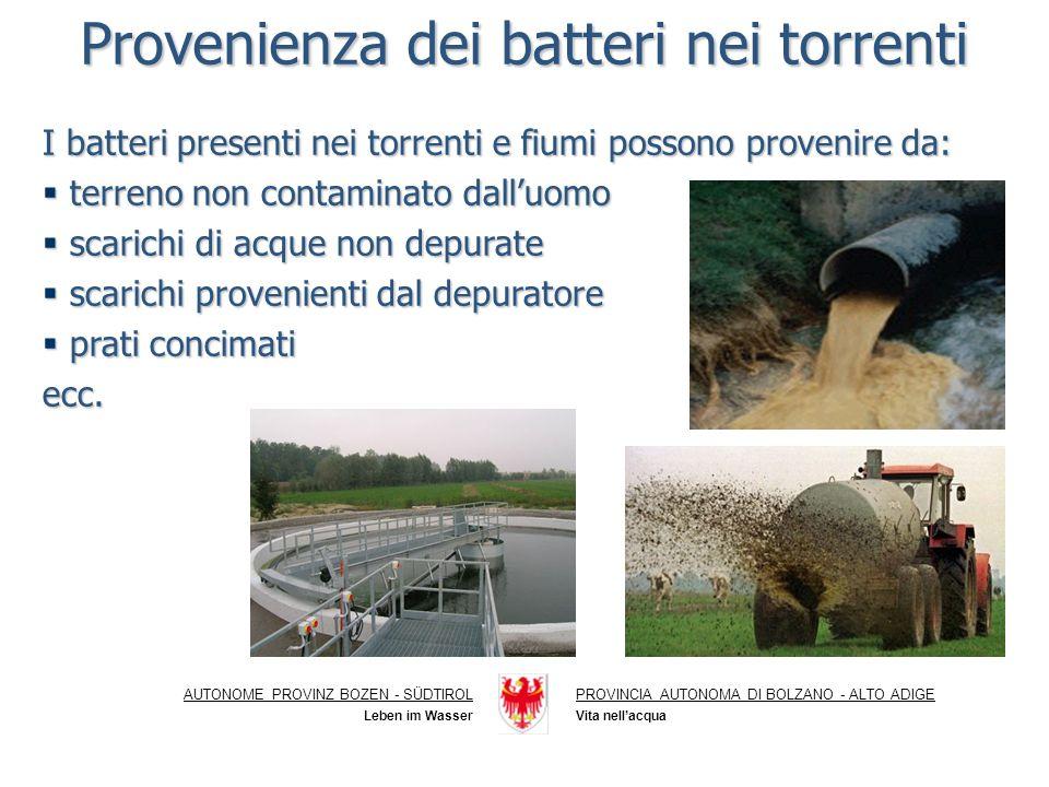 Provenienza dei batteri nei torrenti
