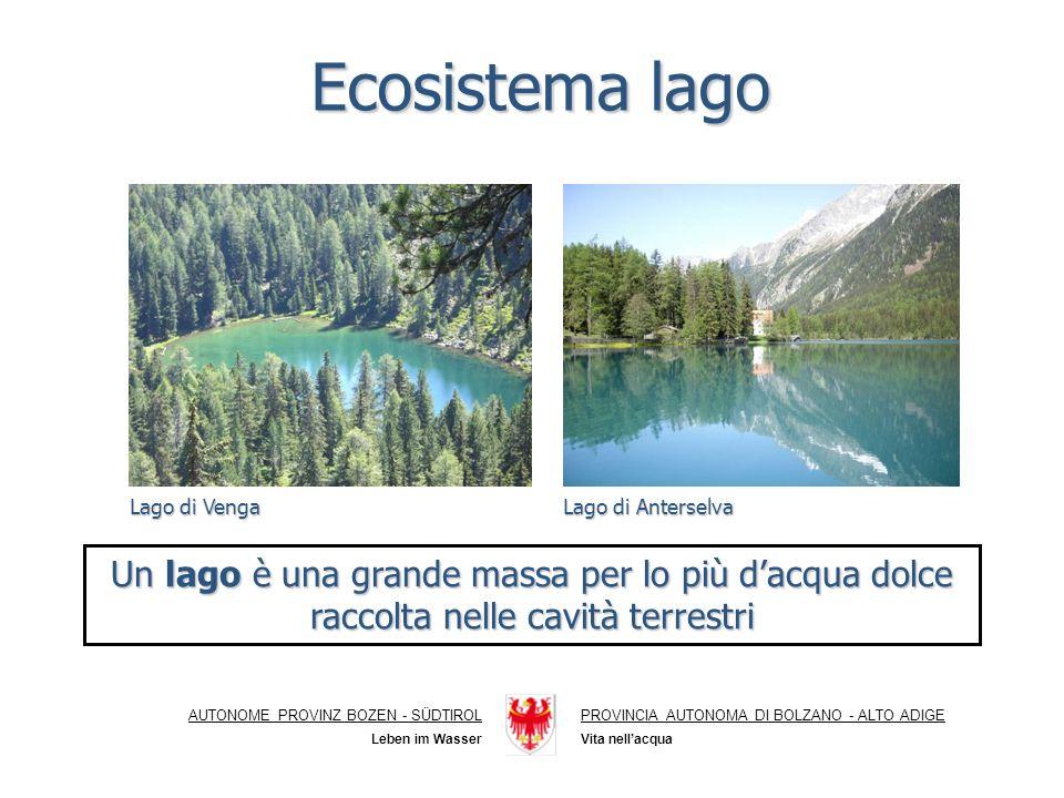 Ecosistema lago Lago di Venga. Lago di Anterselva. Un lago è una grande massa per lo più d'acqua dolce raccolta nelle cavità terrestri.