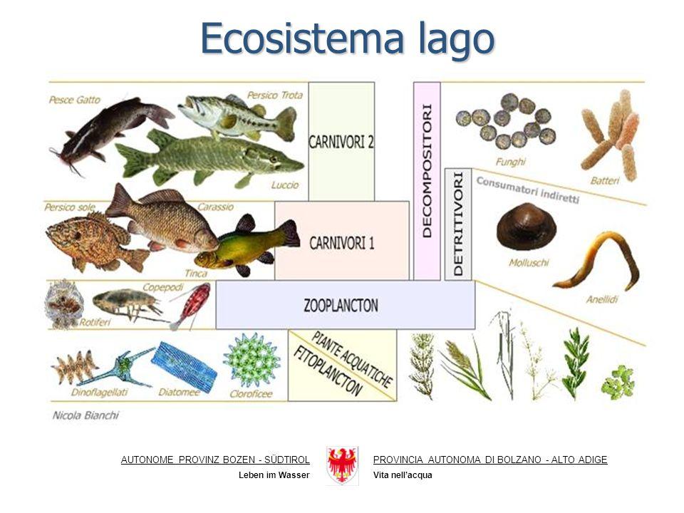 Ecosistema lago AUTONOME PROVINZ BOZEN - SÜDTIROL