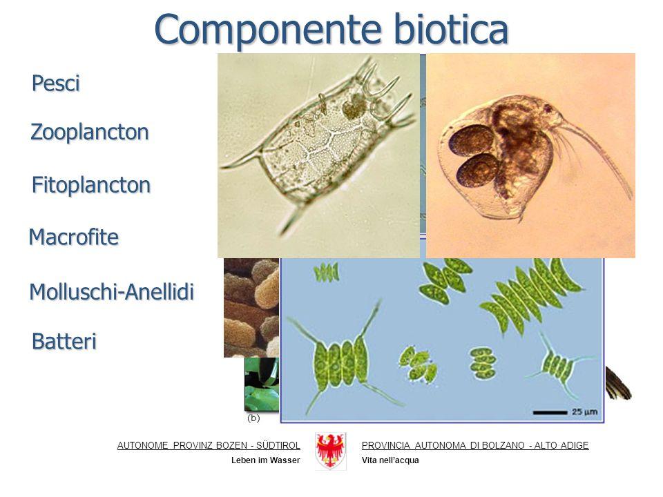 Componente biotica Pesci Zooplancton Fitoplancton Macrofite