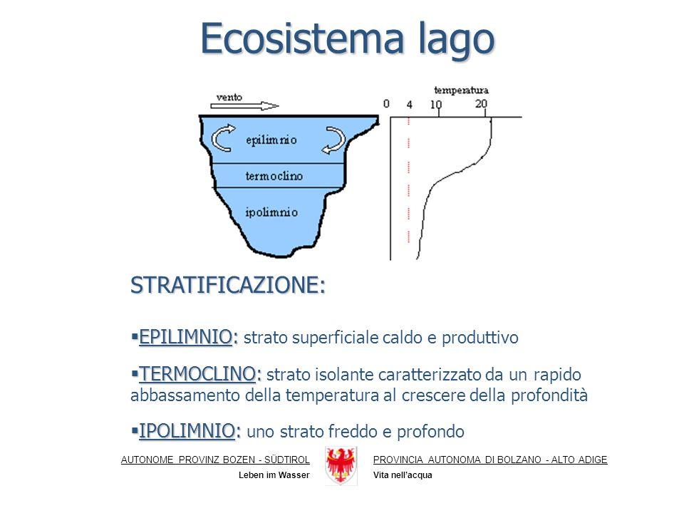 Ecosistema lago STRATIFICAZIONE: