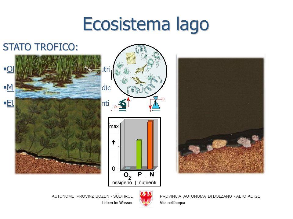 Ecosistema lago STATO TROFICO: OLIGOTROFO: scarsità di nutrienti