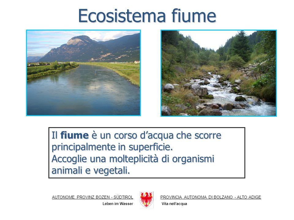 Ecosistema fiume Il fiume è un corso d'acqua che scorre principalmente in superficie. Accoglie una molteplicità di organismi animali e vegetali.