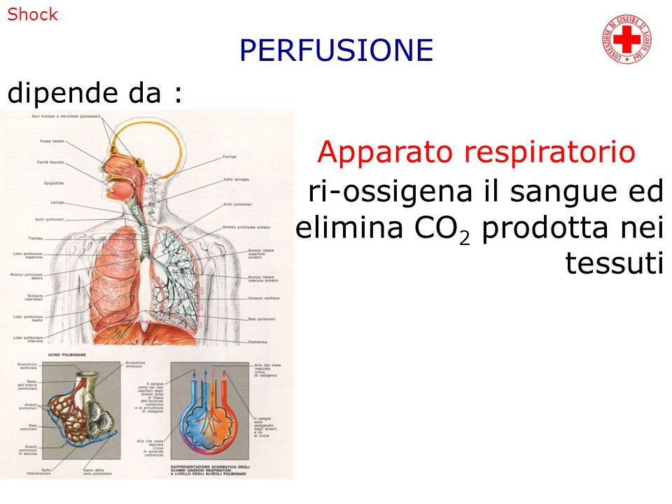Apparato respiratorio ri-ossigena il sangue ed