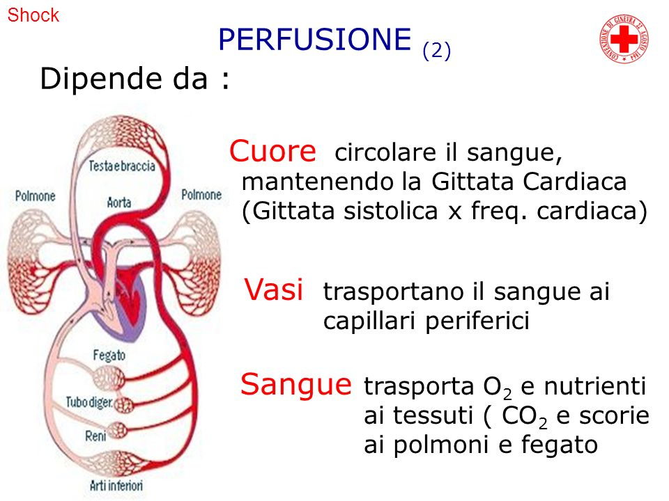 PERFUSIONE (2) Dipende da : Cuore Vasi Sangue circolare il sangue,
