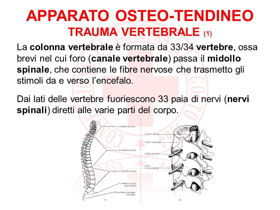 APPARATO OSTEO-TENDINEO TRAUMA VERTEBRALE (1)