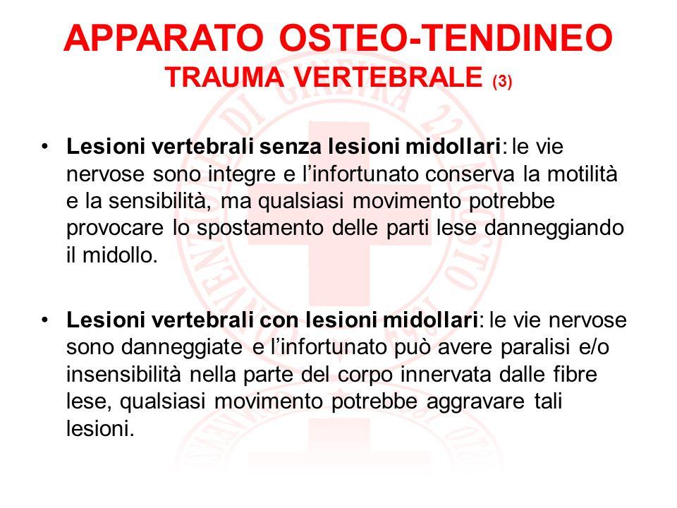 APPARATO OSTEO-TENDINEO TRAUMA VERTEBRALE (3)