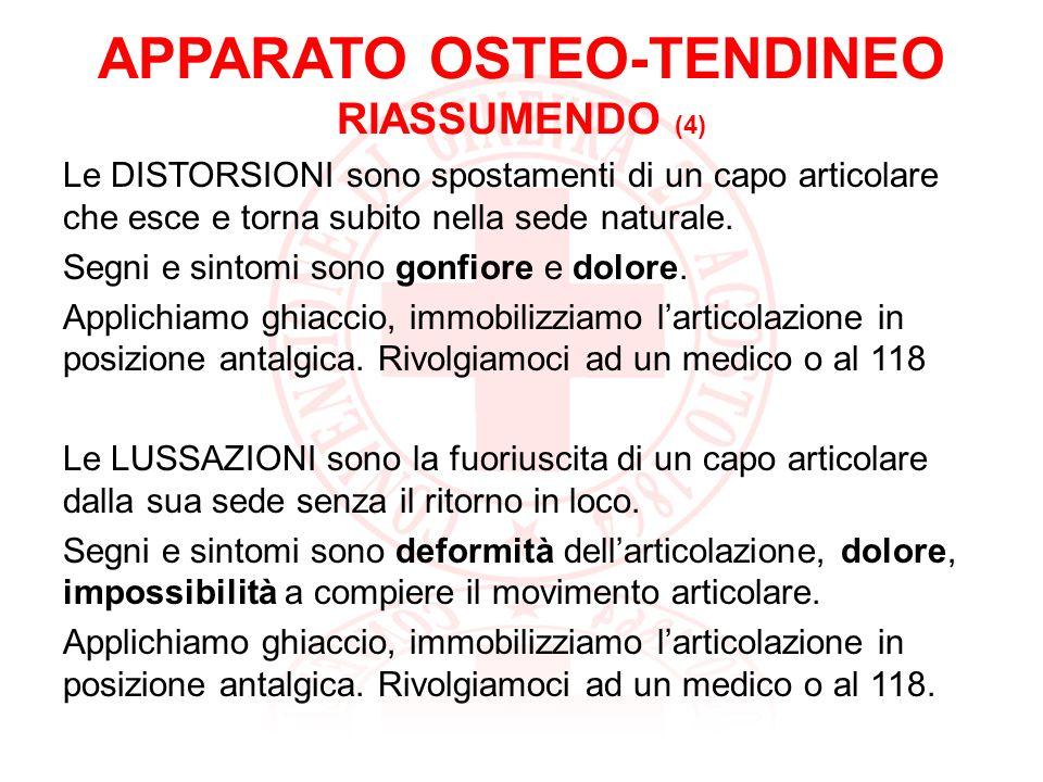 APPARATO OSTEO-TENDINEO RIASSUMENDO (4)