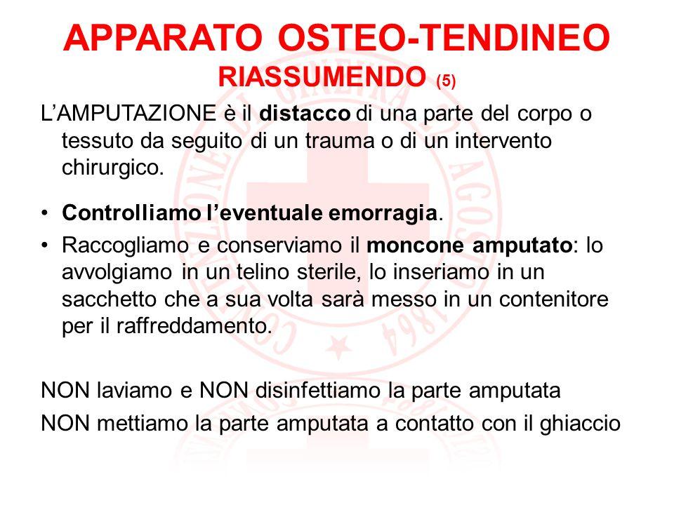 APPARATO OSTEO-TENDINEO RIASSUMENDO (5)