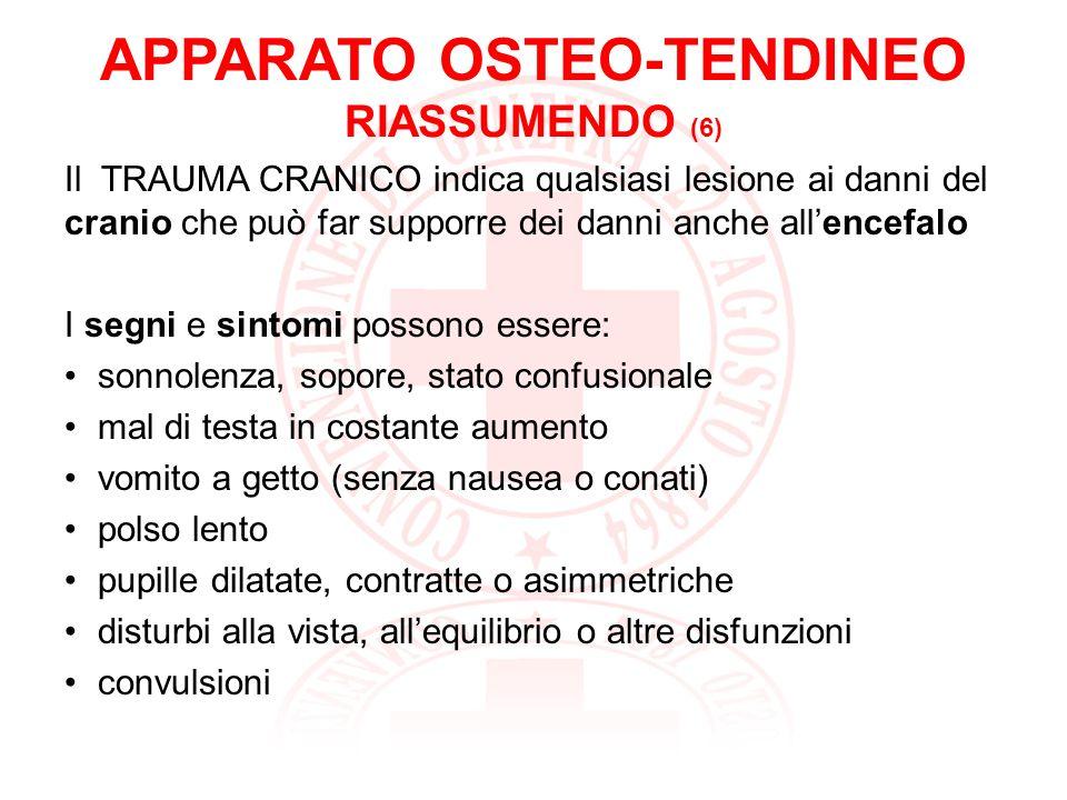 APPARATO OSTEO-TENDINEO RIASSUMENDO (6)