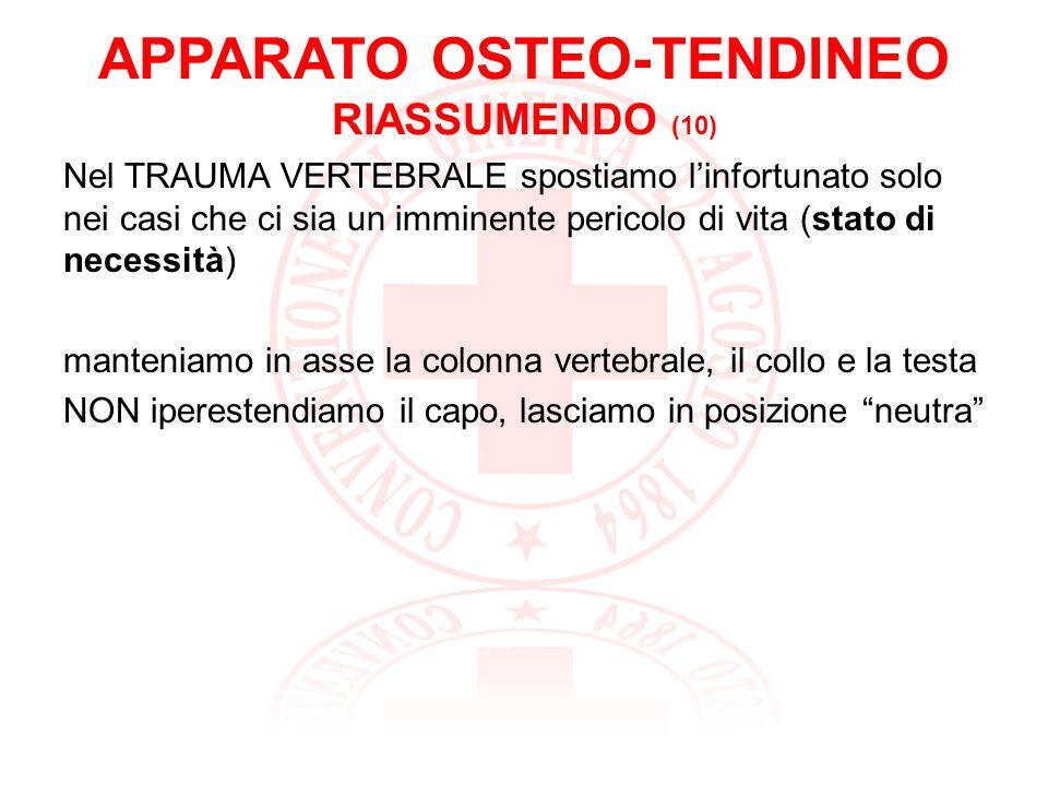 APPARATO OSTEO-TENDINEO RIASSUMENDO (10)