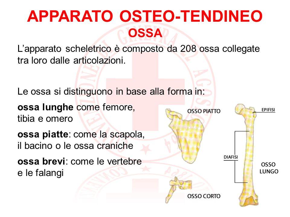 APPARATO OSTEO-TENDINEO OSSA