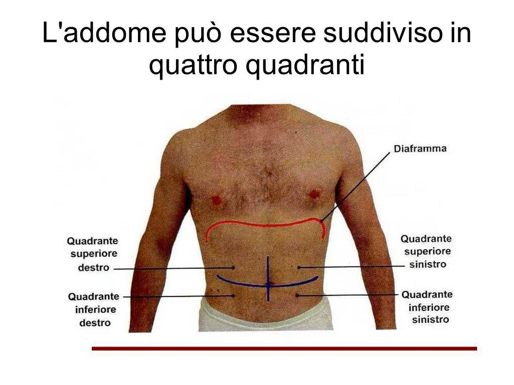 L addome può essere suddiviso in quattro quadranti