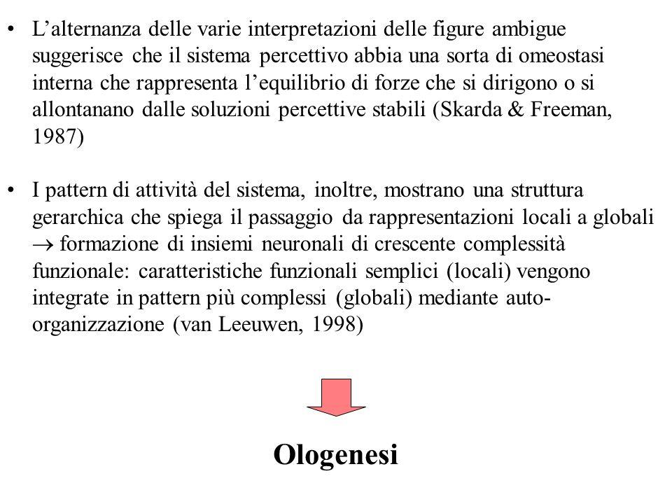 L'alternanza delle varie interpretazioni delle figure ambigue suggerisce che il sistema percettivo abbia una sorta di omeostasi interna che rappresenta l'equilibrio di forze che si dirigono o si allontanano dalle soluzioni percettive stabili (Skarda & Freeman, 1987)