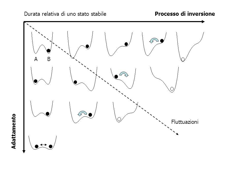 Fluttuazioni A B Durata relativa di uno stato stabile Processo di inversione Adattamento