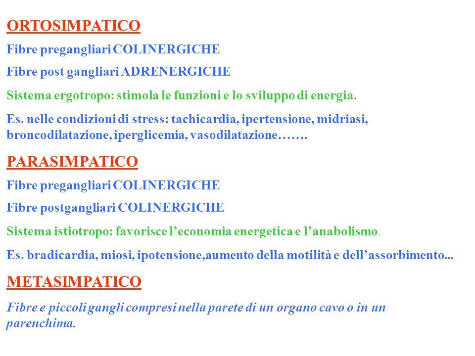 ORTOSIMPATICO PARASIMPATICO METASIMPATICO