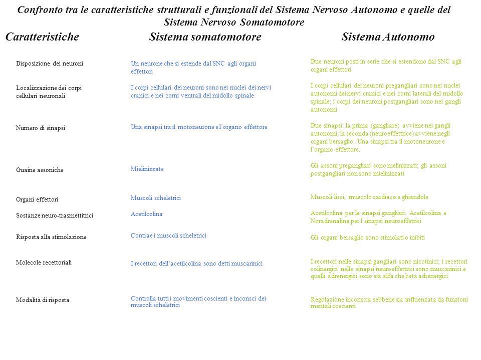 Caratteristiche Sistema somatomotore Sistema Autonomo