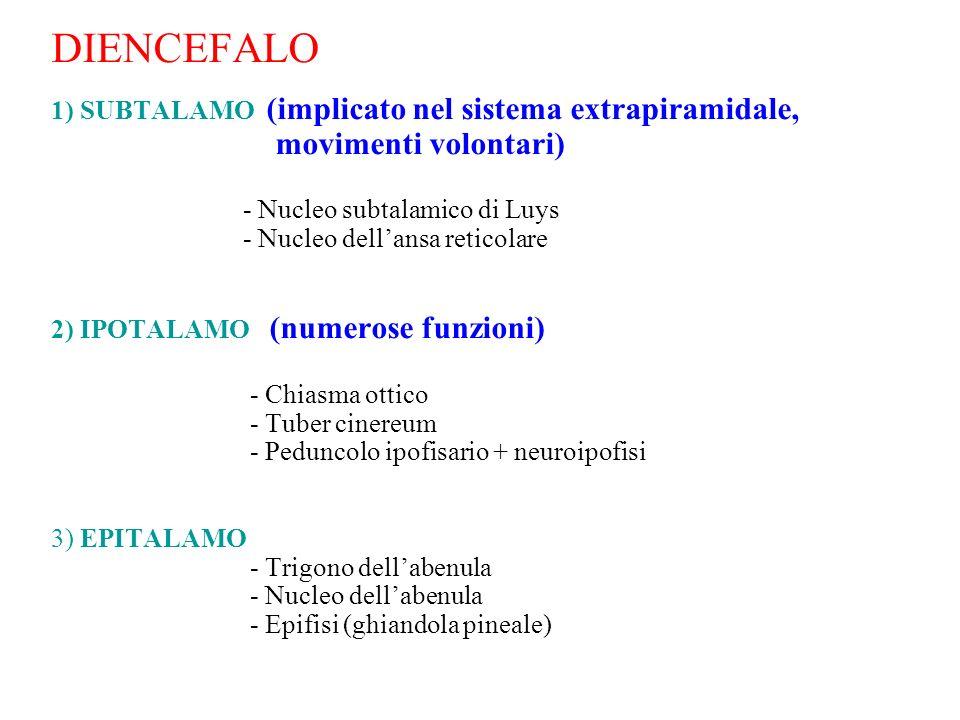 DIENCEFALO 1) SUBTALAMO (implicato nel sistema extrapiramidale, movimenti volontari) - Nucleo subtalamico di Luys - Nucleo dell'ansa reticolare 2) IPOTALAMO (numerose funzioni) - Chiasma ottico - Tuber cinereum - Peduncolo ipofisario + neuroipofisi 3) EPITALAMO - Trigono dell'abenula - Nucleo dell'abenula - Epifisi (ghiandola pineale)
