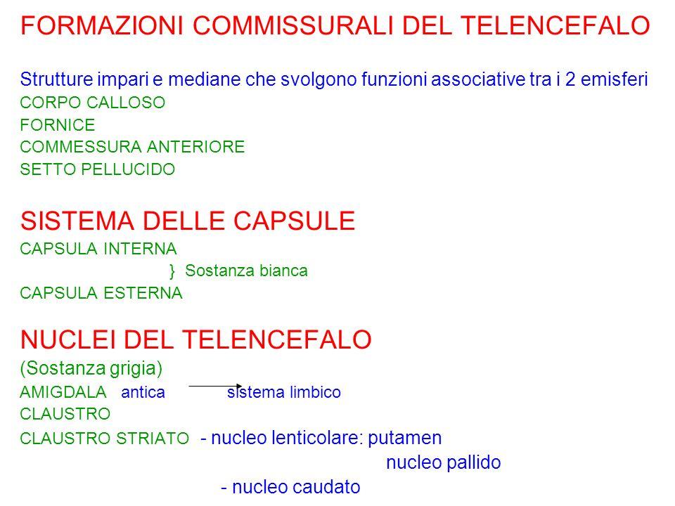 FORMAZIONI COMMISSURALI DEL TELENCEFALO