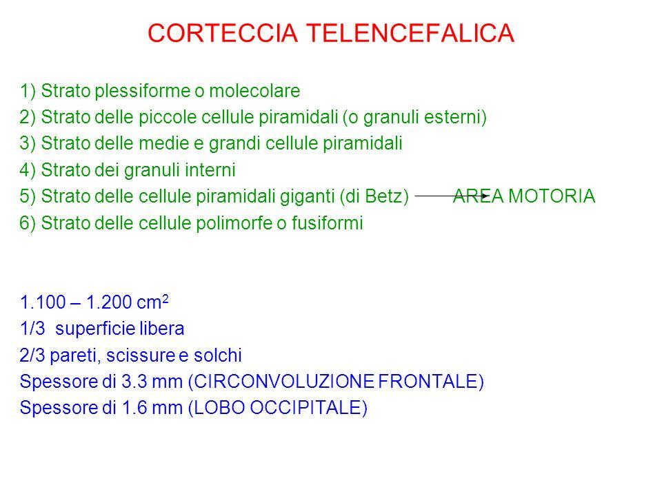 CORTECCIA TELENCEFALICA