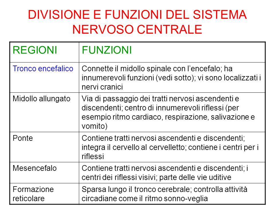 DIVISIONE E FUNZIONI DEL SISTEMA NERVOSO CENTRALE