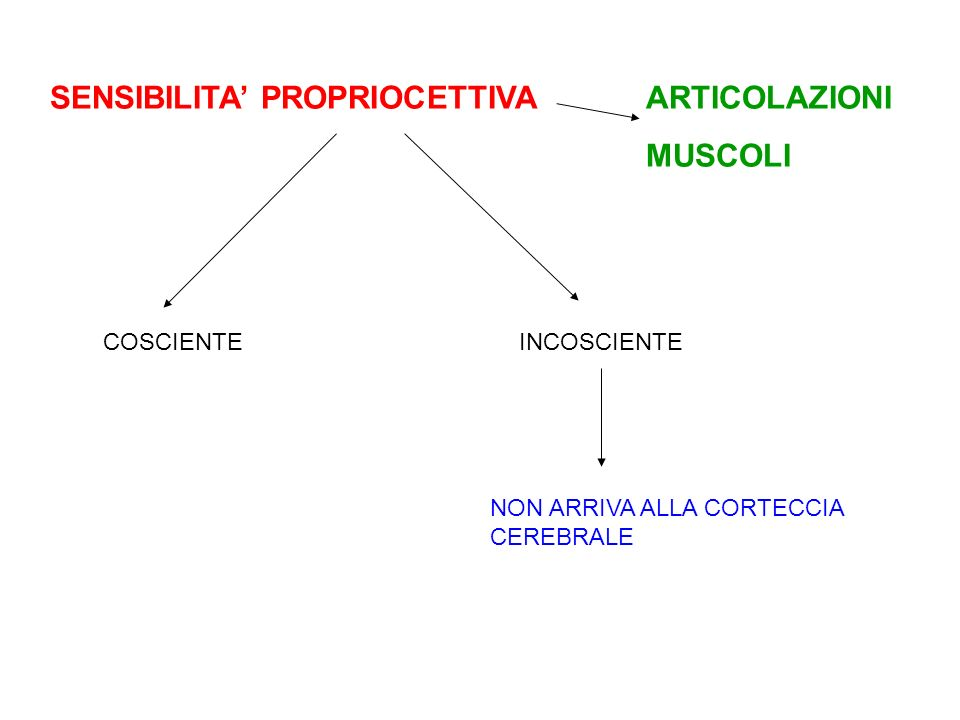 MUSCOLI SENSIBILITA' PROPRIOCETTIVA ARTICOLAZIONI COSCIENTE