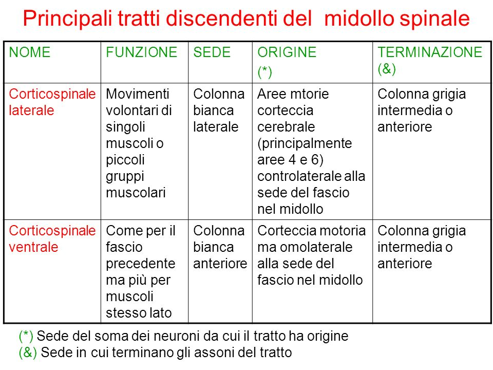 Principali tratti discendenti del midollo spinale