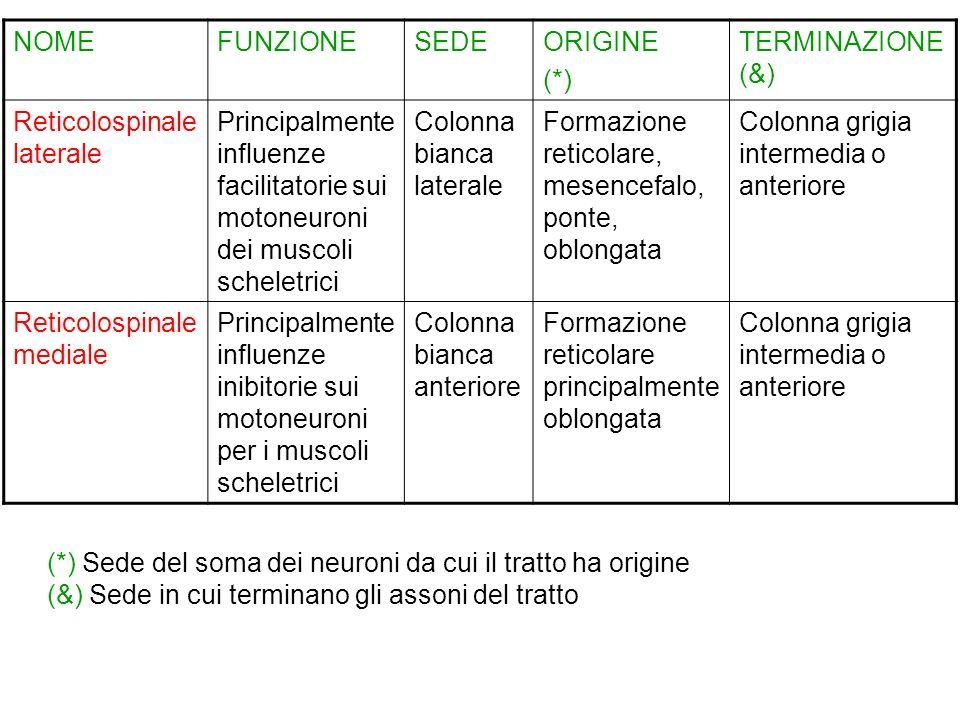 NOME FUNZIONE. SEDE. ORIGINE. (*) TERMINAZIONE (&) Reticolospinale laterale.