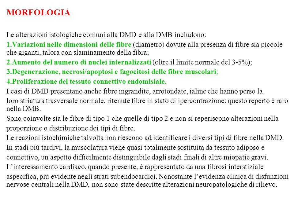 MORFOLOGIA Le alterazioni istologiche comuni alla DMD e alla DMB includono: