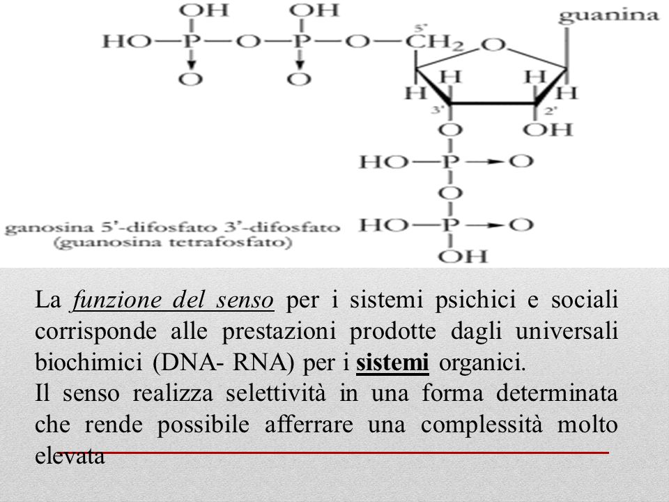 La funzione del senso per i sistemi psichici e sociali corrisponde alle prestazioni prodotte dagli universali biochimici (DNA- RNA) per i sistemi organici.