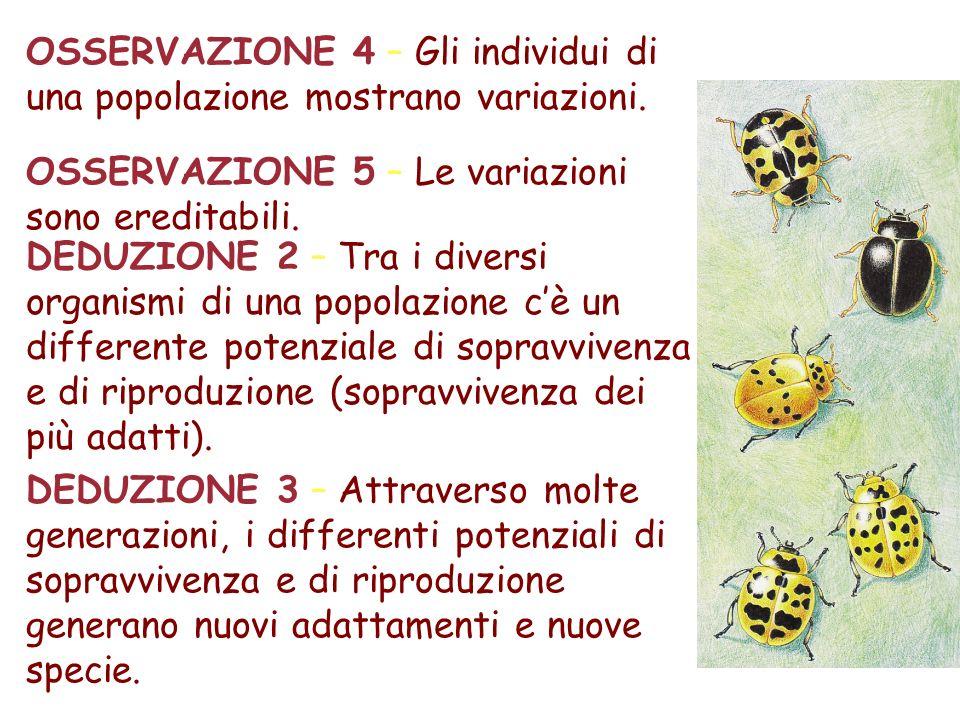 OSSERVAZIONE 4 – Gli individui di una popolazione mostrano variazioni.