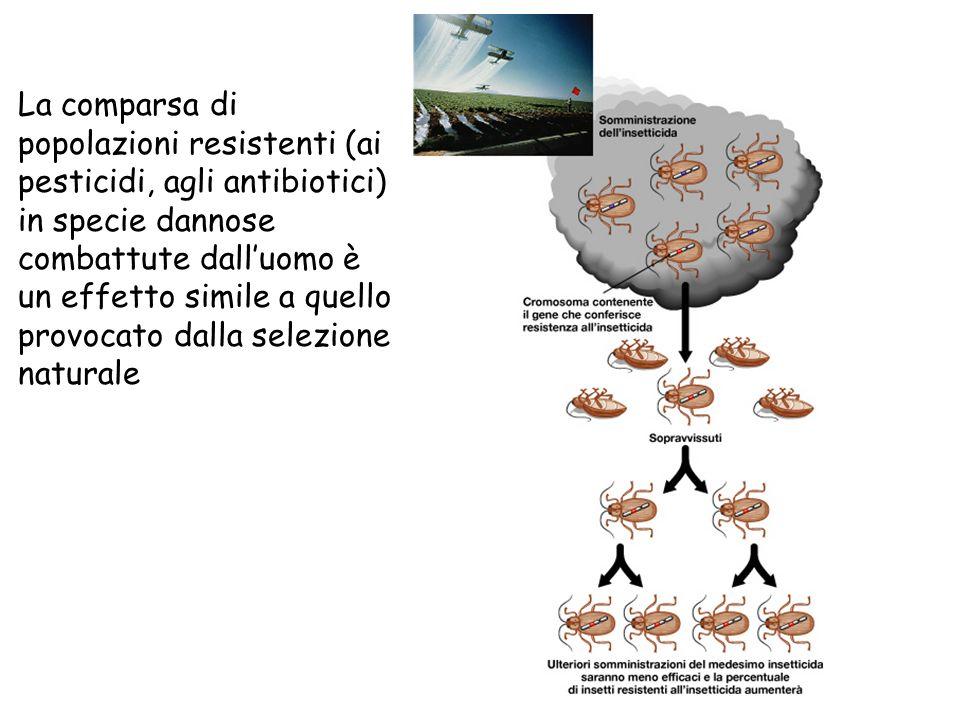 La comparsa di popolazioni resistenti (ai pesticidi, agli antibiotici) in specie dannose combattute dall'uomo è un effetto simile a quello provocato dalla selezione naturale