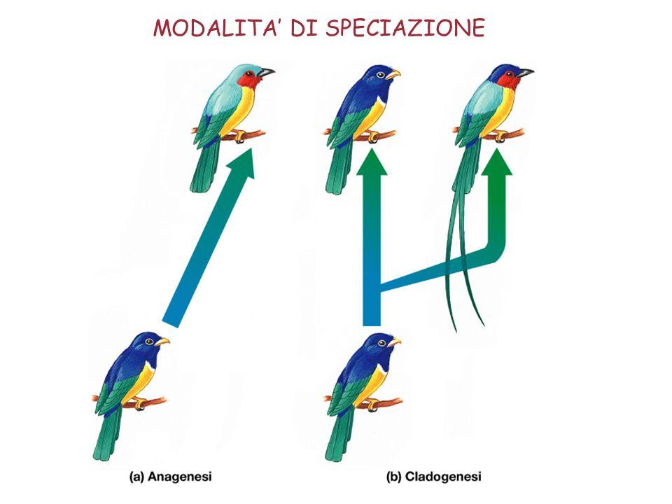 MODALITA' DI SPECIAZIONE