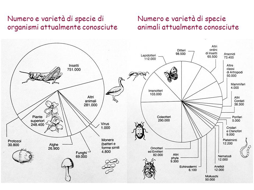 Numero e varietà di specie di organismi attualmente conosciute