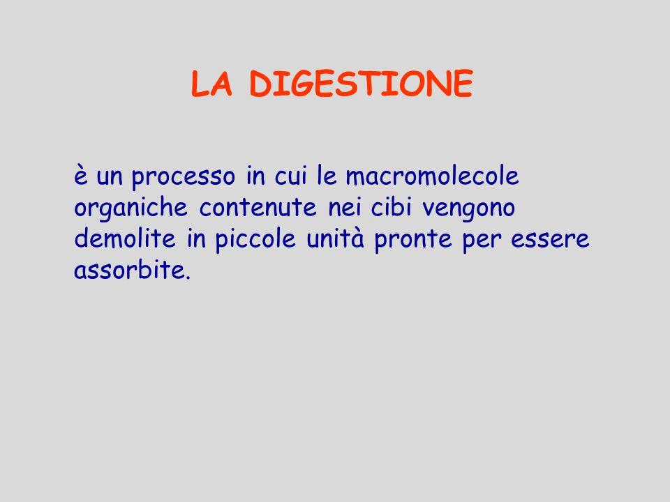 LA DIGESTIONE è un processo in cui le macromolecole organiche contenute nei cibi vengono demolite in piccole unità pronte per essere assorbite.