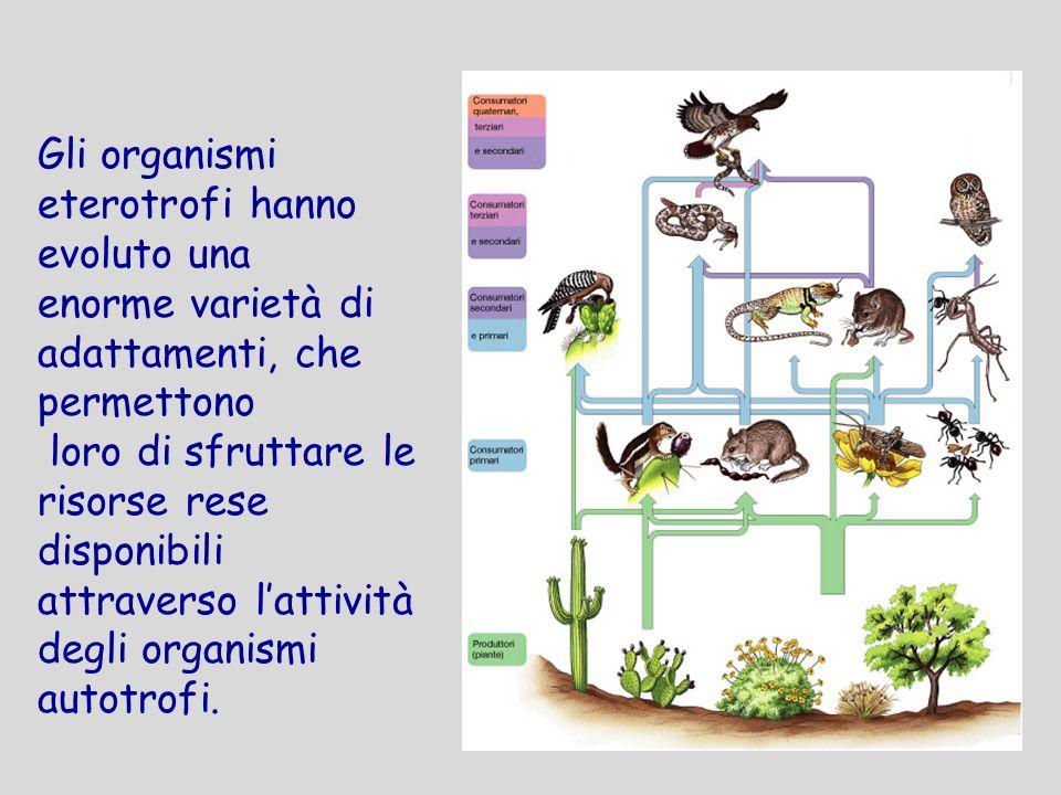 Gli organismi eterotrofi hanno evoluto una